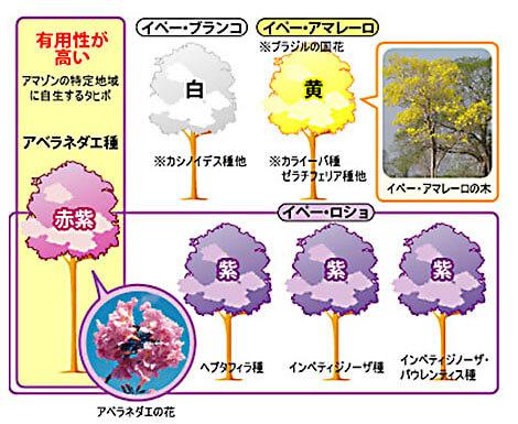 イペと呼ばれる樹木の種類